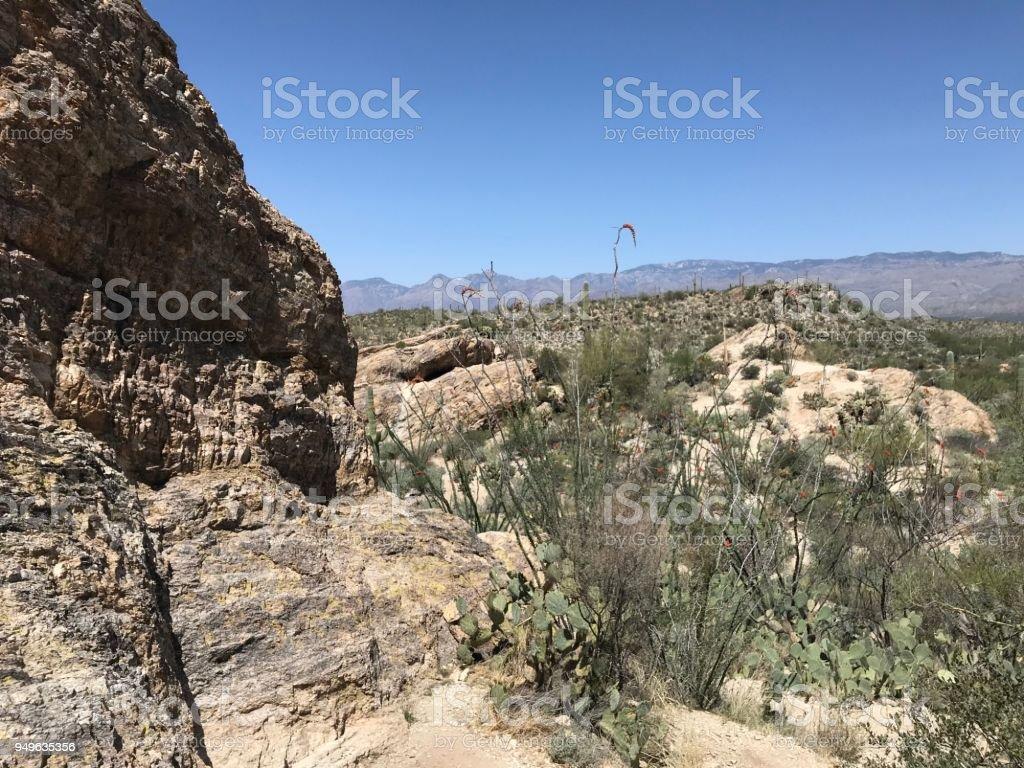 Mesquite stock photo