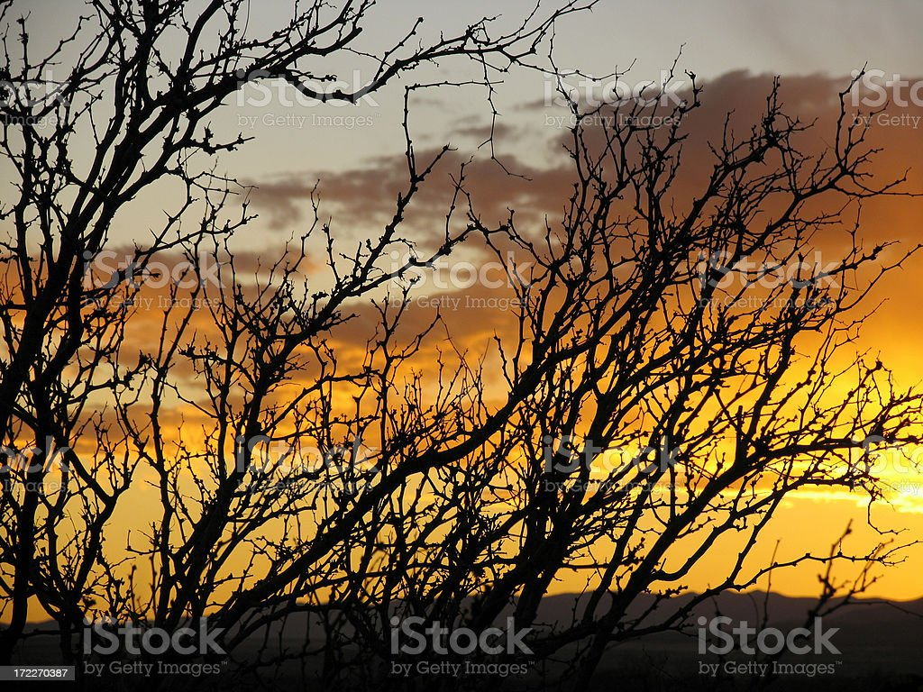 Mesquite Silhouette royalty-free stock photo