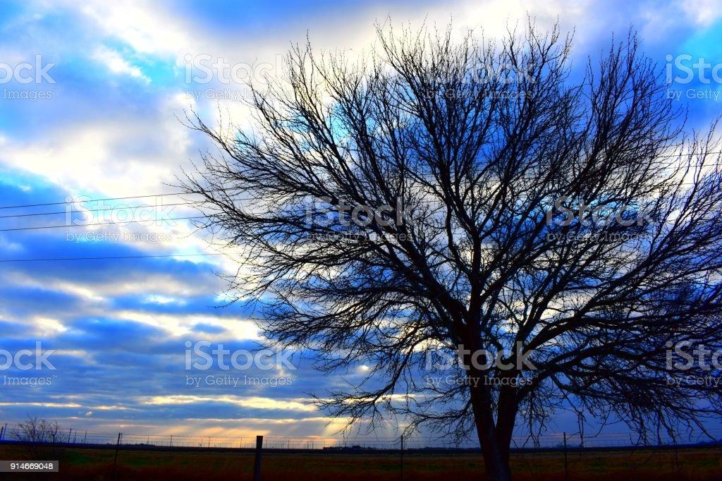 Mesquite skies stock photo