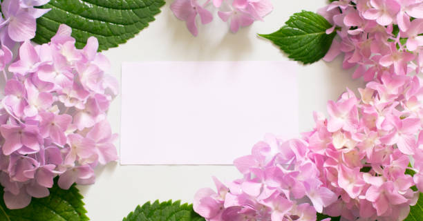 nachricht und frühlingsblumen auf weißer hölzerner hintergrund - geburtstag vergessen stock-fotos und bilder
