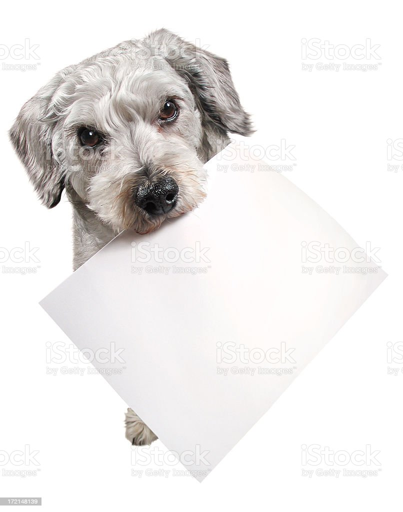 Message from the Dog royalty-free stock photo