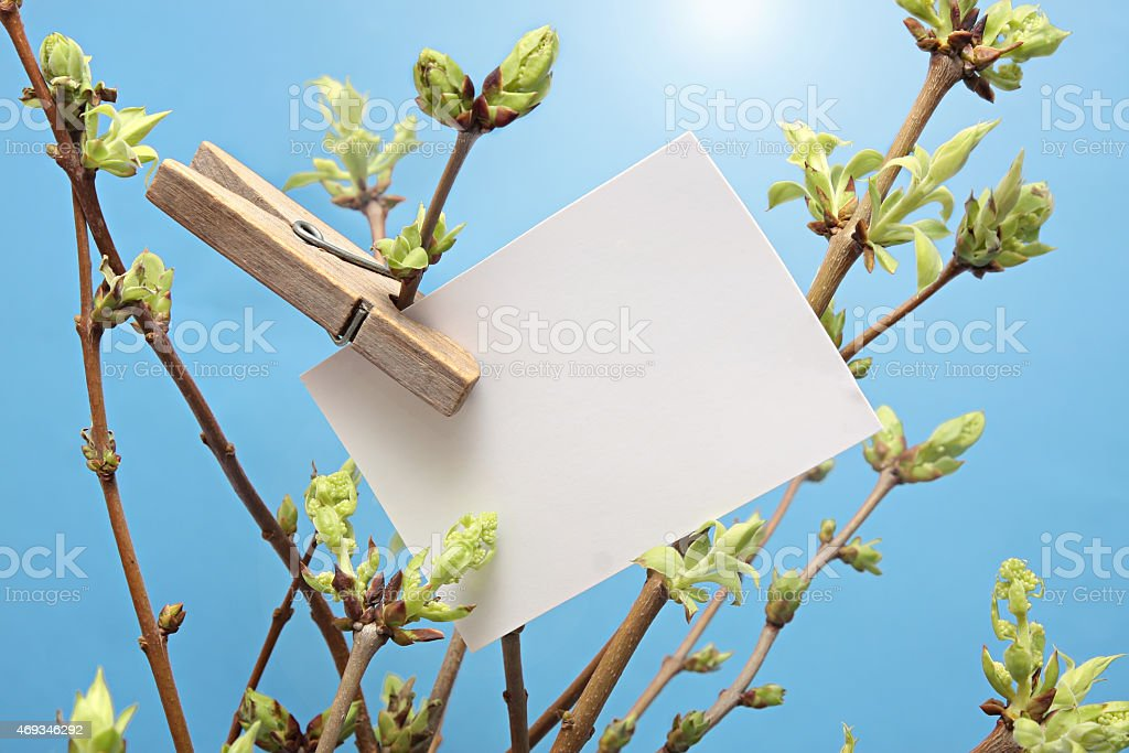 message written  white card hanging on green leafy branch by stock photo