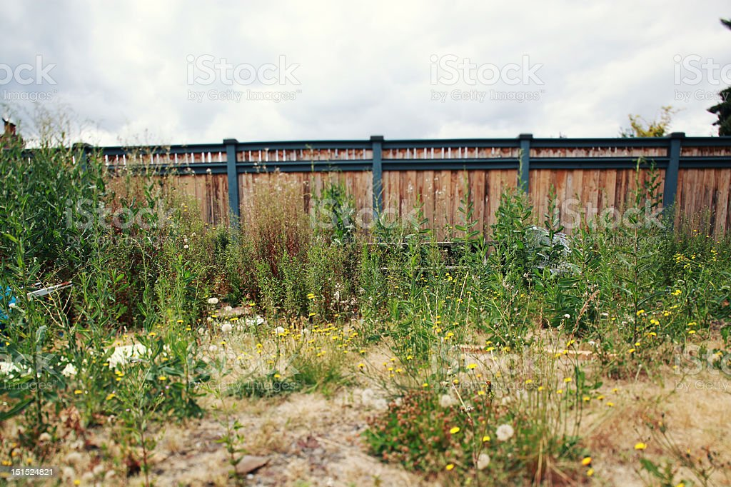 Messy Backyard royalty-free stock photo