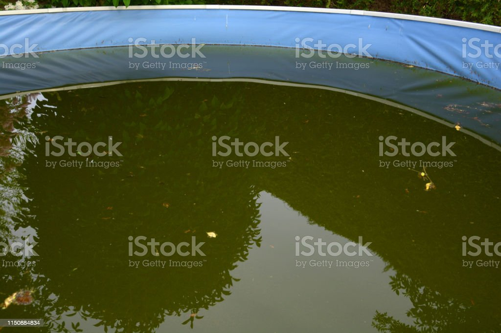 trees are reflected in the green acidified water of a steel pool