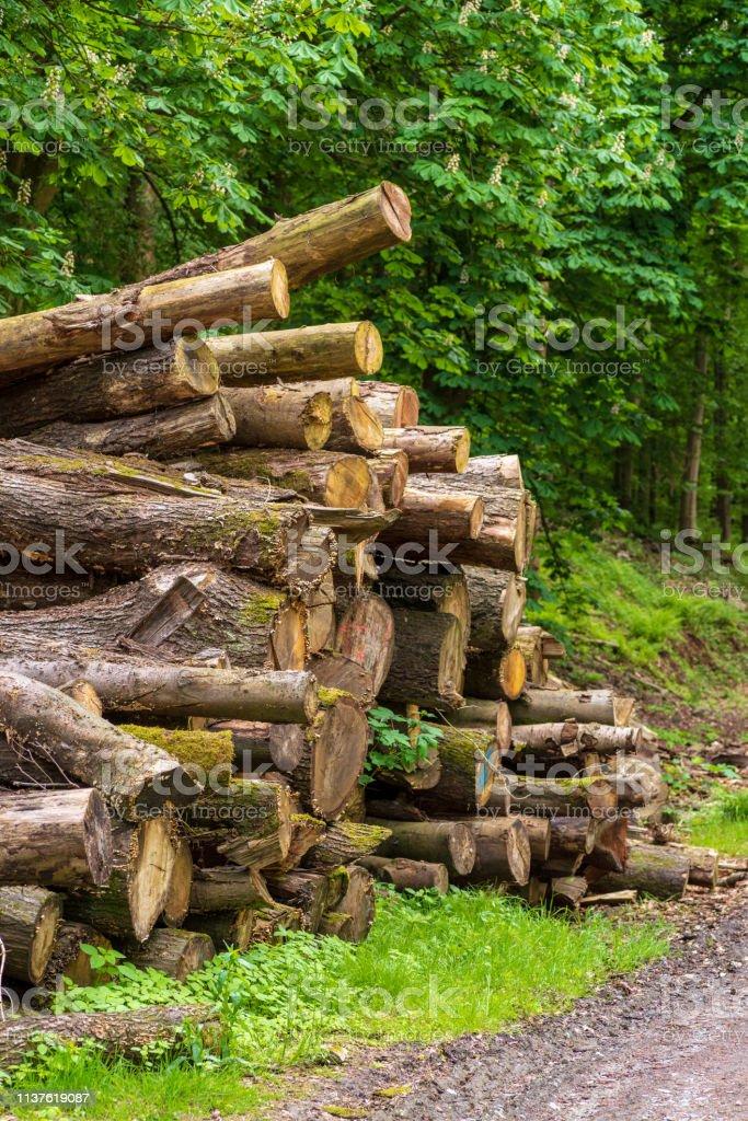 Messy gestapelte Baumstämme im Wald – Foto
