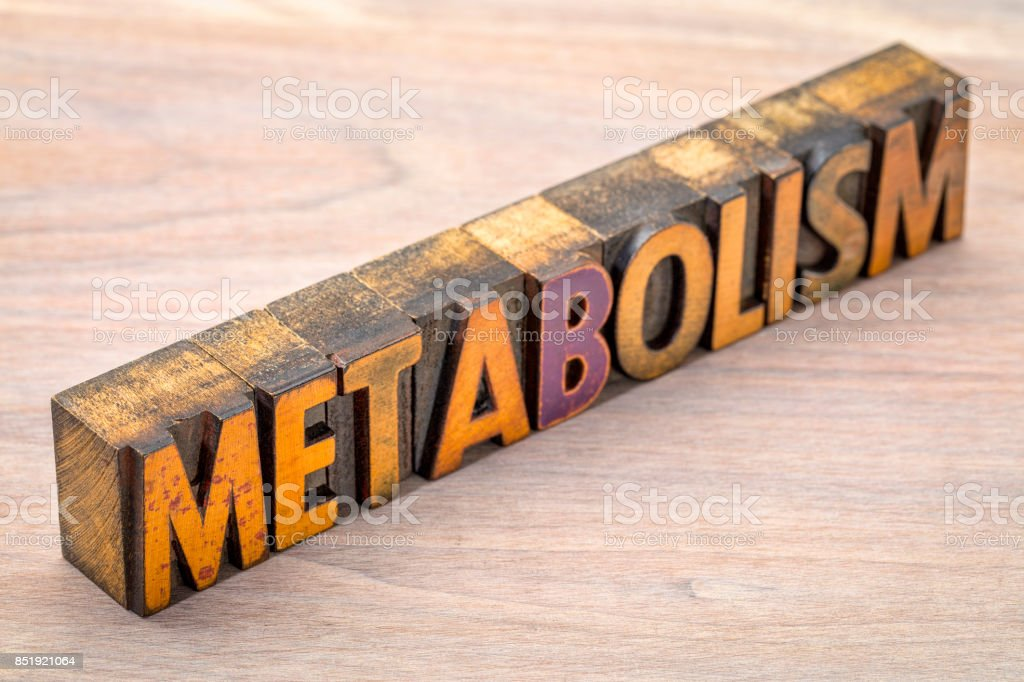 metabolism word in vintage wood type stock photo