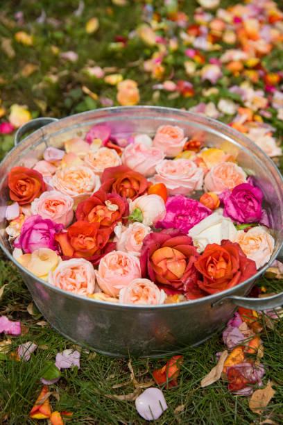 metallbecken mit wasser und schönen rosenköpfen und blütenblättern. blumen auf dem gras. - herbst hochzeitseinladungen stock-fotos und bilder