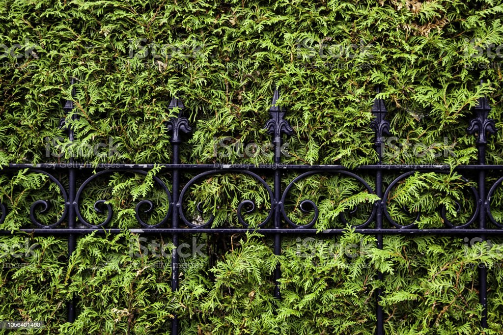 Metal fence in a hedge, detail of protection and security
