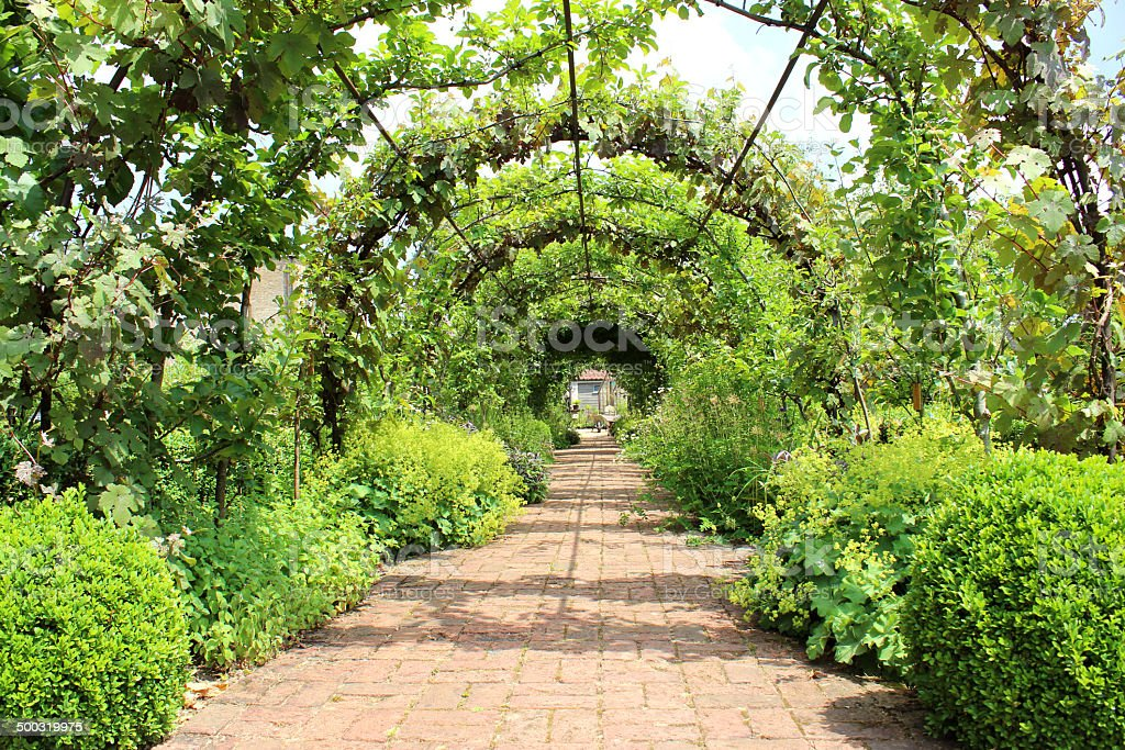 metal pergola garden archway tunnel espalier apple trees grape vines stock photo more pictures. Black Bedroom Furniture Sets. Home Design Ideas