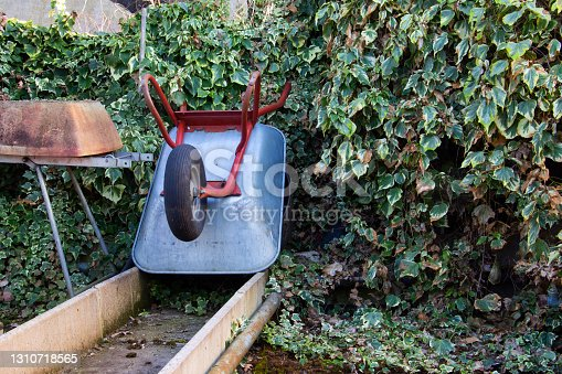 istock A metal wheelbarrow leaning against a wall in a greenhouse covered with plants 1310718565
