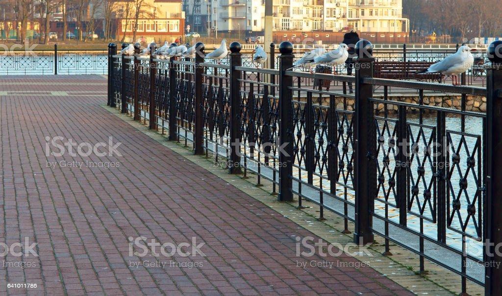 metal, hierro labrado, cerca, cerca, cerca, partición - foto de stock