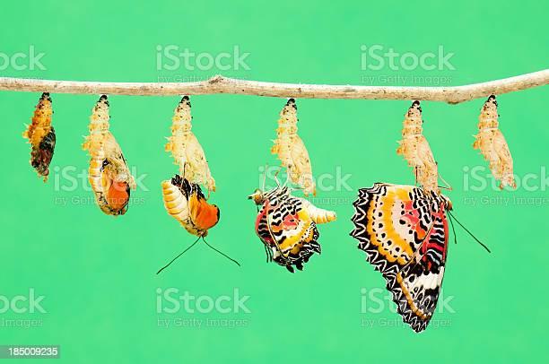Metamorphosis of butterfly picture id185009235?b=1&k=6&m=185009235&s=612x612&h=uvgy4lu13c20fwpxwyxvjmse9ir1cauh4jk3xg4negk=