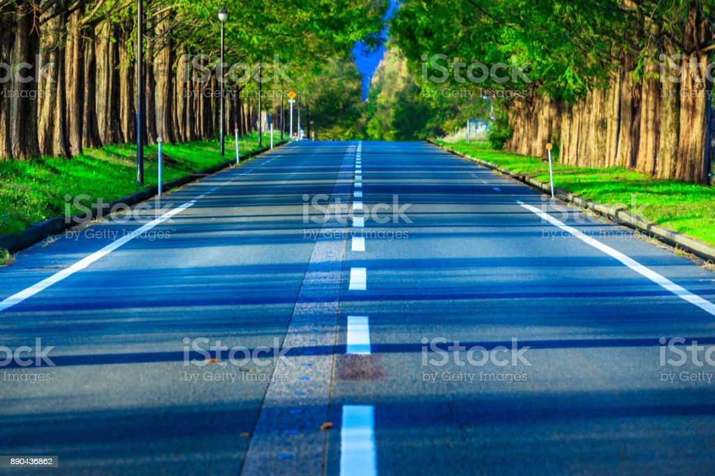 Metasequoia trees and roads stock photo