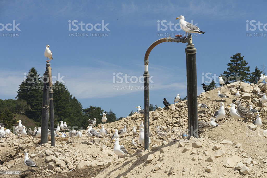 Fotografía de Metano Gas En El Vertedero De Basuras y más banco de ...
