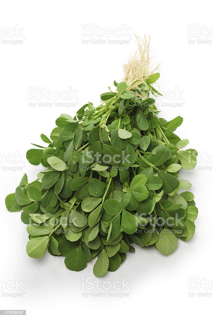 methi, fenugreek leaves stock photo