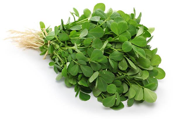 methi, du fenugrec feuilles - fenugrec photos et images de collection