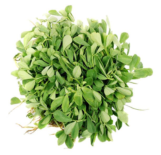 methi légumes - fenugrec photos et images de collection