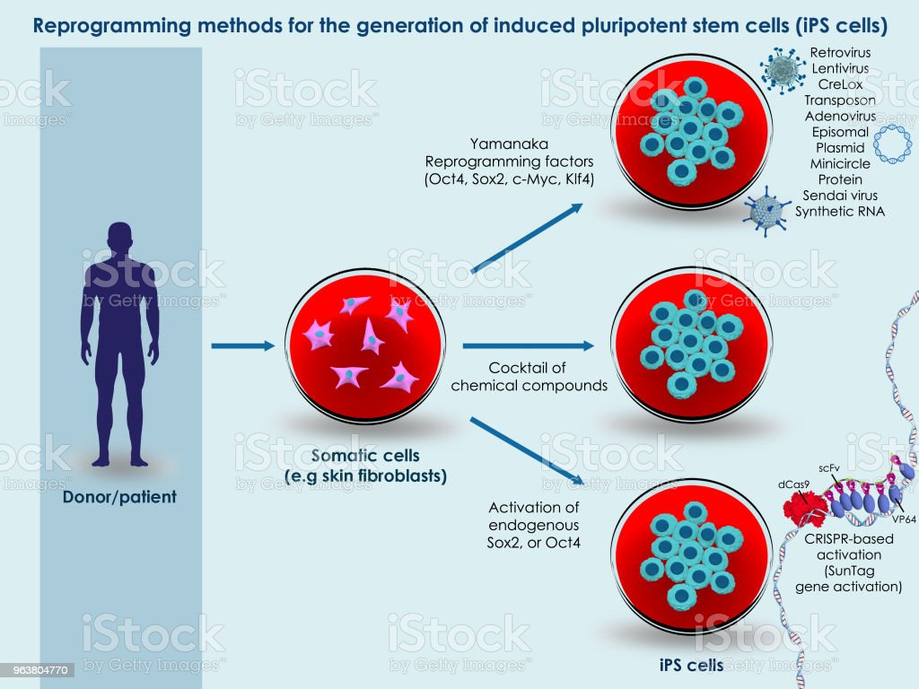 Methods for generation of induced pluripotent stem cells royalty-free stock photo