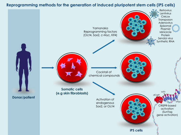 Methods for generation of induced pluripotent stem cells stock photo