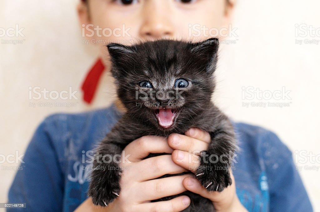 Mewing black kitten in boy hands stock photo