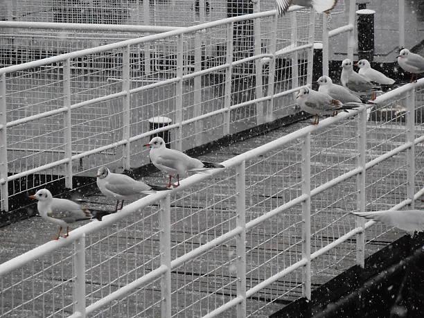 Mews auf den Pier – Foto
