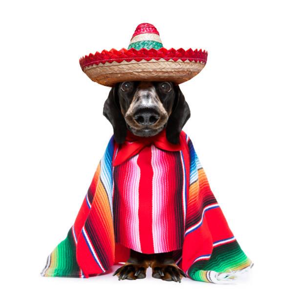Mexican dachshund with poncho picture id1257851738?b=1&k=6&m=1257851738&s=612x612&w=0&h=9 cmvaveuxgbwb23ycblyiamzrsgyii3cfer823ynf4=