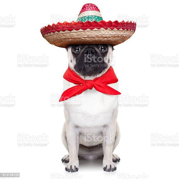 Mexican dog picture id514728125?b=1&k=6&m=514728125&s=612x612&h=us8mf3buur  n wwptbf3o54iey2muphintoeu rt i=