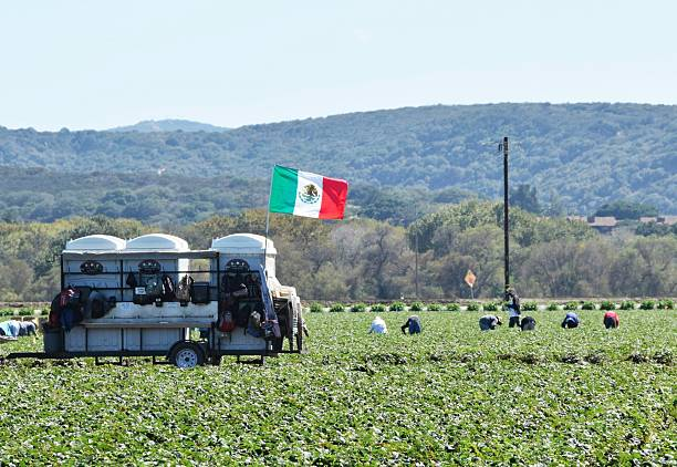 Mexican flag flies in the fields of California stock photo