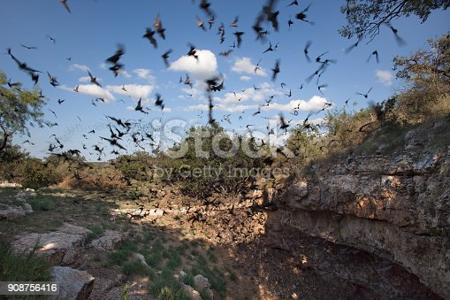 Mexican free-tailed bats fly outside the Eckert James River Bat Cave Preserve for a night of consuming insects in the Texas Hill Country west of Austin where more than one million bats emerge during summer evenings.