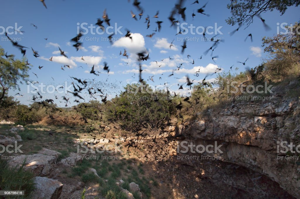 Mexican free-tailed bats flying outside cave preserve Texas stock photo