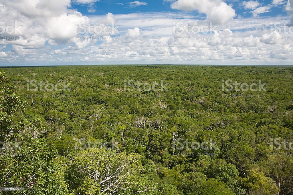 Mexican jungle panorama stock photo