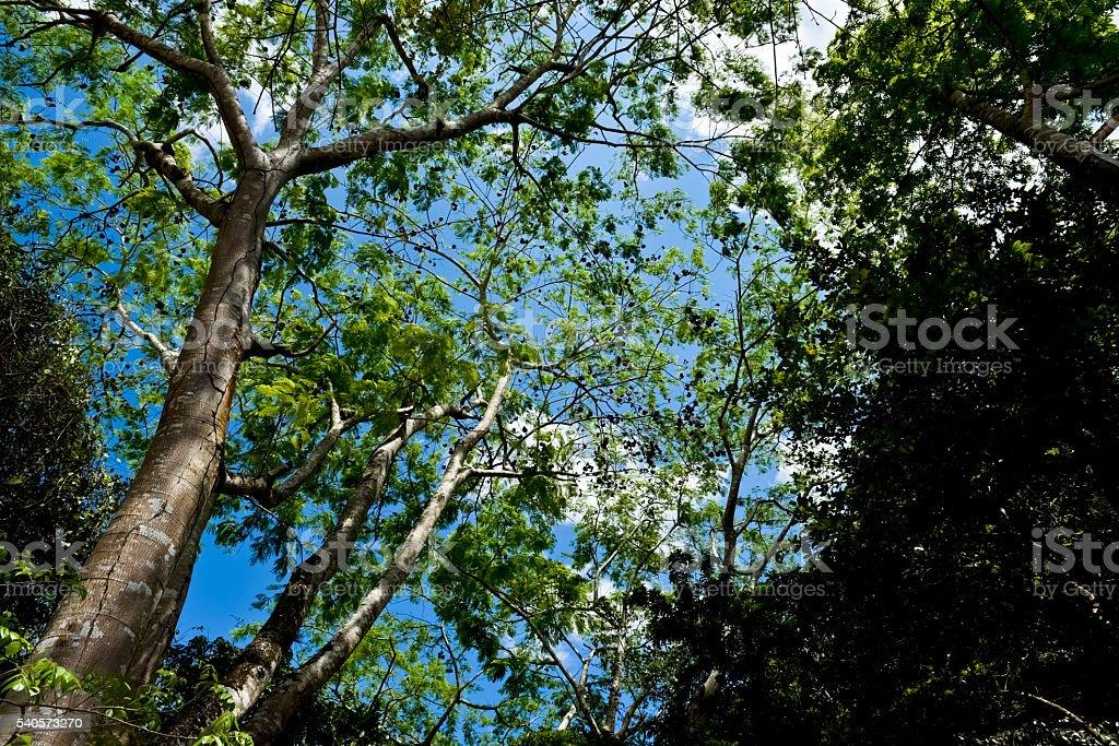 メキシカンジャングル(水平) ストックフォト