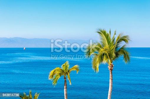 Puerto Vallarta, Mexico - 7th January, 2017. Palm trees of Puerto Vallarta