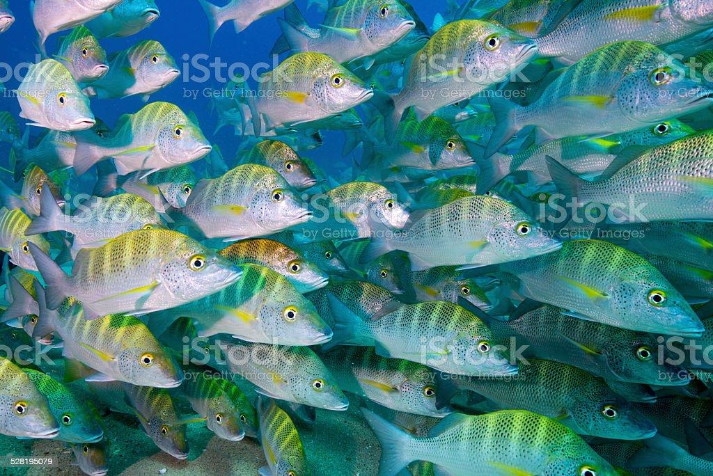 Mexican swarm stock photo