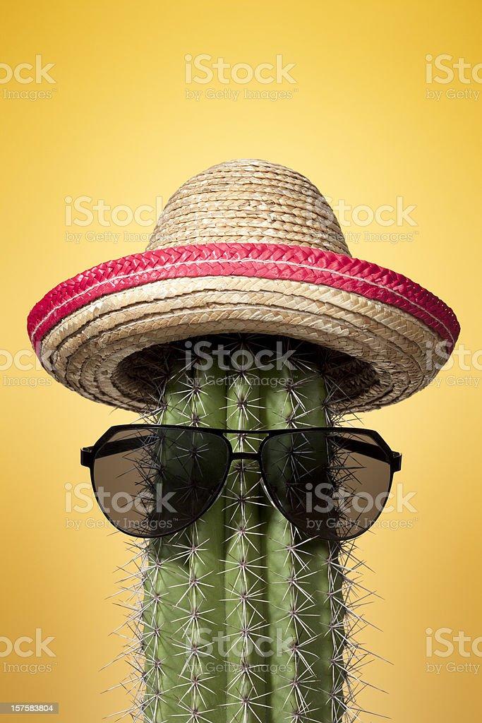 Mexico cactus. Summer Humor Sombrero Mexican Culture Holiday Heat royalty-free stock photo