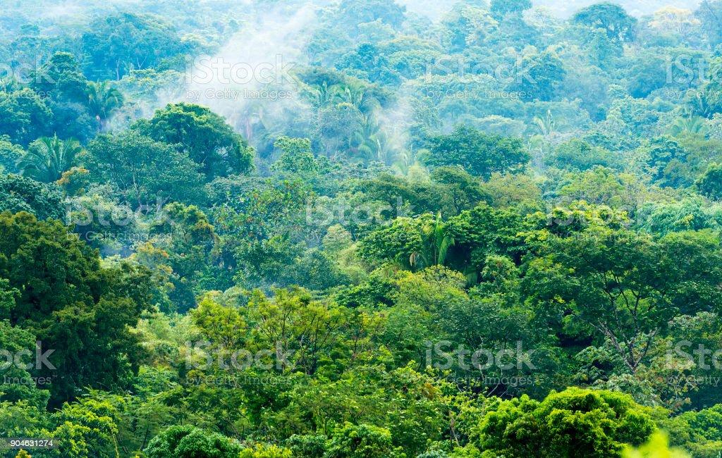 Paisagem de selva do México - foto de acervo