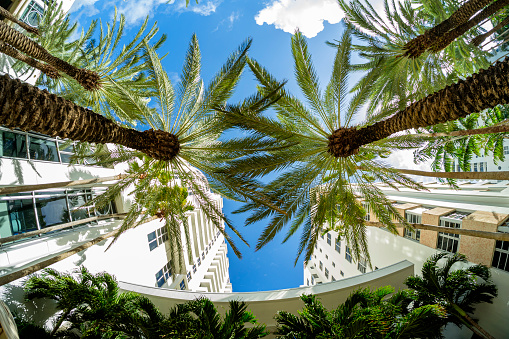 Beautiful Miami Beach fish eye cityscape with art deco architecture and majestic palm trees.
