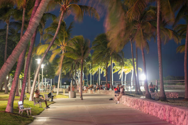 lummus park stock photos, pictures & royalty-free images