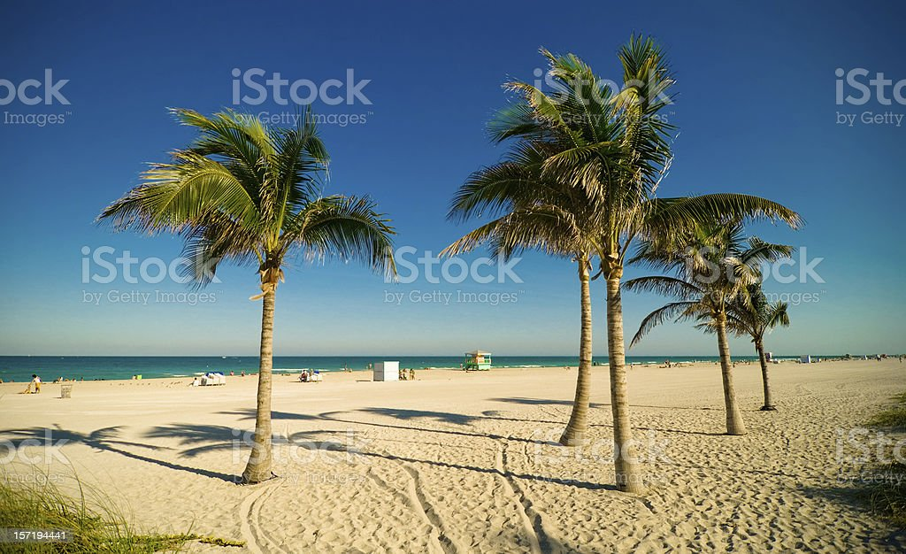 miami beach palms royalty-free stock photo