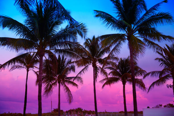 Miami Beach South Beach sunset palm trees Florida stock photo