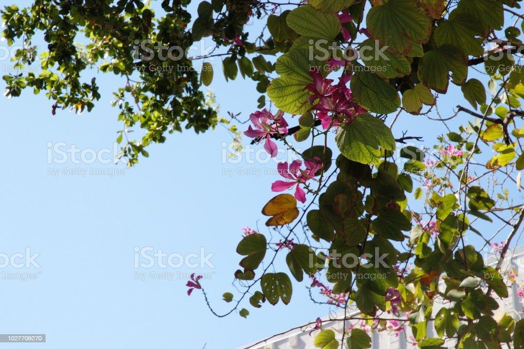 마이애미 꽃 스톡 사진