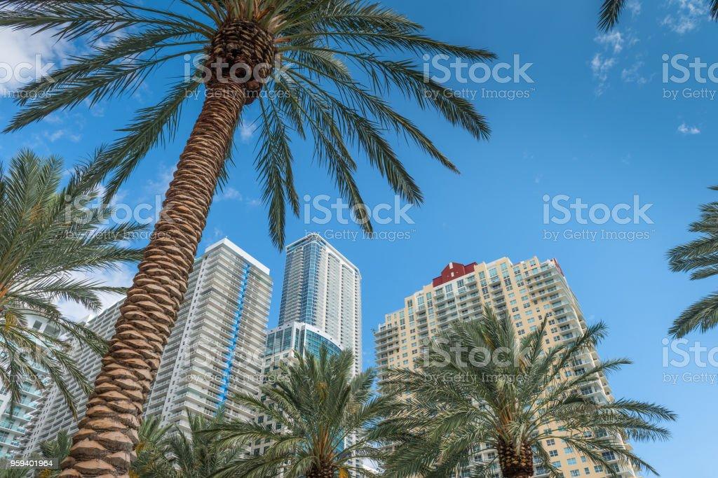 Miami-Höhen – Foto