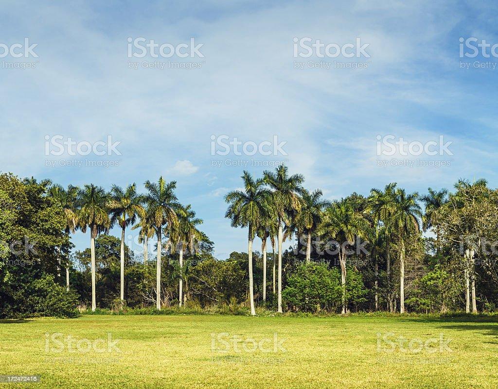 miami landscape stock photo