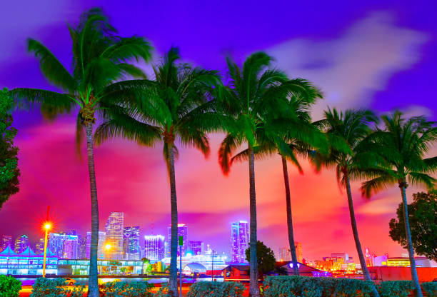 Miami skyline sunset with palm trees Florida Miami skyline at sunset with palm trees in Florida USA miami beach stock pictures, royalty-free photos & images