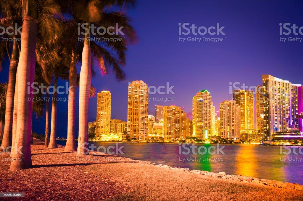 Miami Skyline Through Palm Trees stock photo