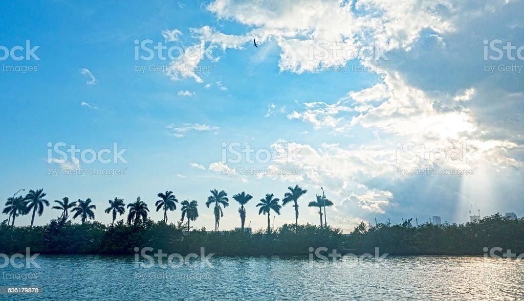 Miami Sun Through Clouds MacArthur Causeway Palm Trees Silhouette stock photo