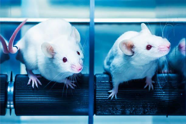 En los ratones rotarod prueba - foto de stock