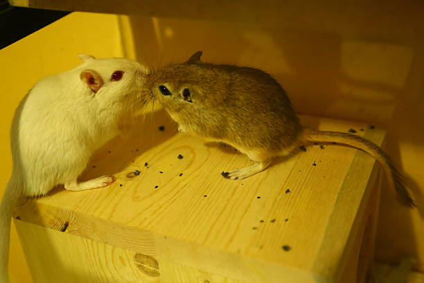mice in their habitat stock photo