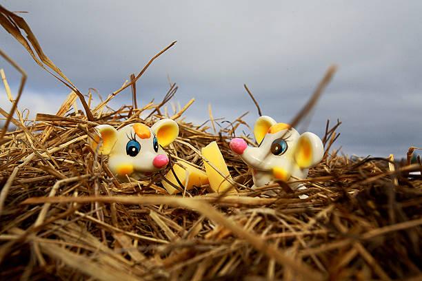 mice sitzt in stroh - spieltag vorspeisen stock-fotos und bilder