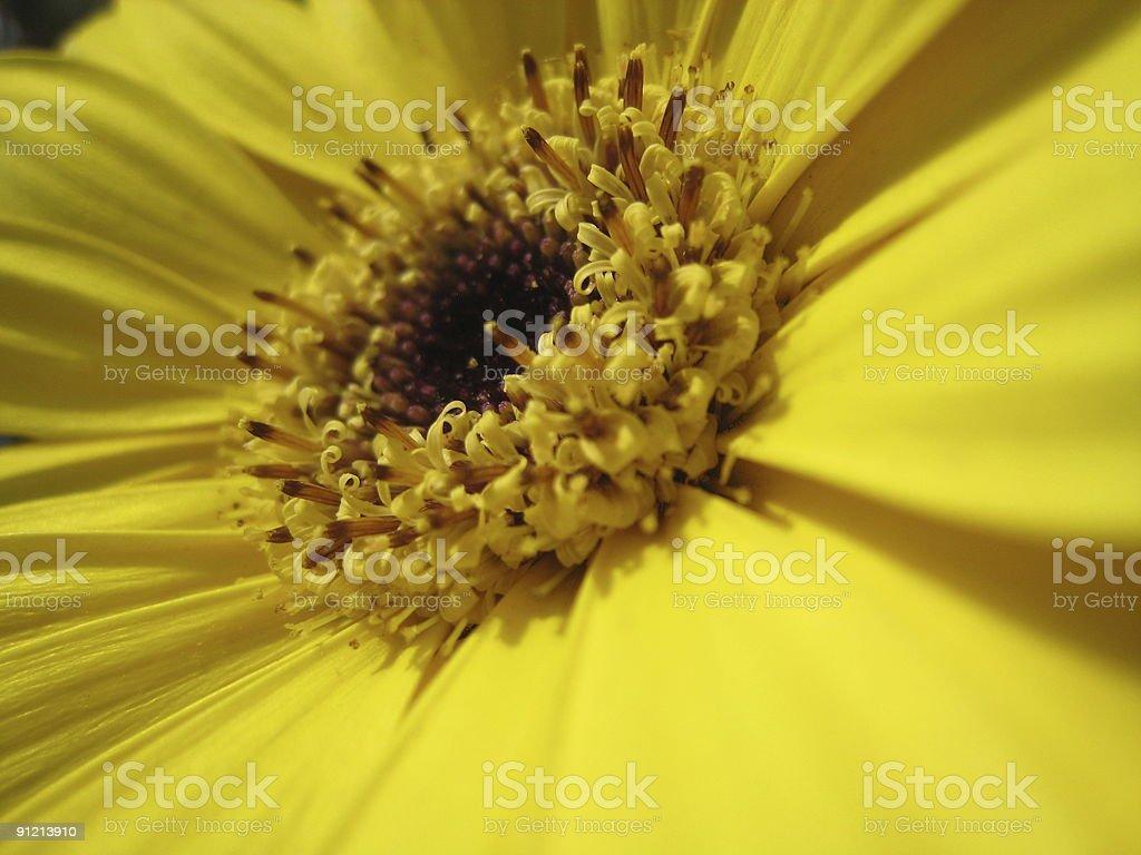 Micro Flower royalty-free stock photo